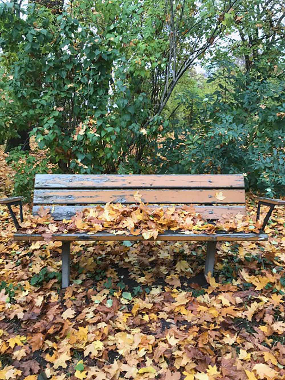 Park bench before removal due to park restauration. 2019. Thora Dahls park, Stockholm, Sweden. Photography by Mona Livholts.
