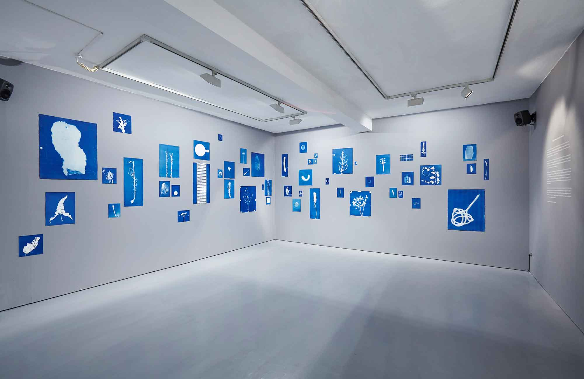 Jessie Brennan, exhibition of visual and audio archives (cyanotypes and oral recordings) produced at The Green Backyard. Installation view at dalla Rosa Gallery, September 2016. (Photo: Matthew Booth)